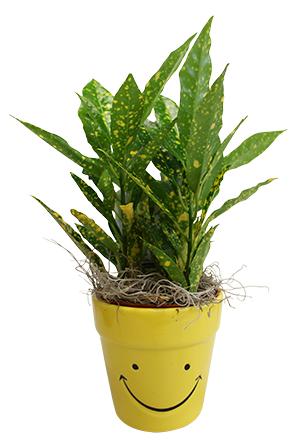 "4"" Plant Buddy"
